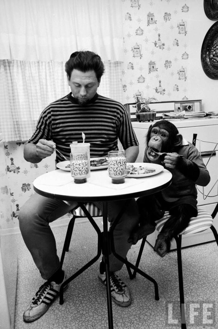 st james david moe chimpanzee