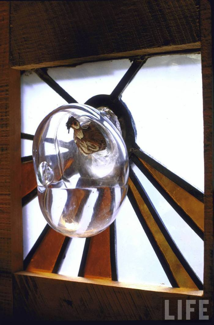 Here, a glass bubble serves as a birdhouse (though the bird pictured is stuffed).