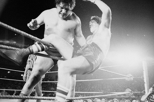 Chuck Wepner is draped on the ropes, about to fall through, after Andre the Giant picked him up and tossed him out of the ring in the third round of the boxer-wrestling match held at Shea Stadium.  Andre was declared the winner in 1:15 after a wild scene in which trainers and handlers tried to push Wepner back in the ring within the 20-second time limit --1976.