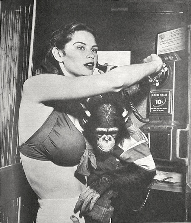 irish mccalla swimsuit chimp pinup
