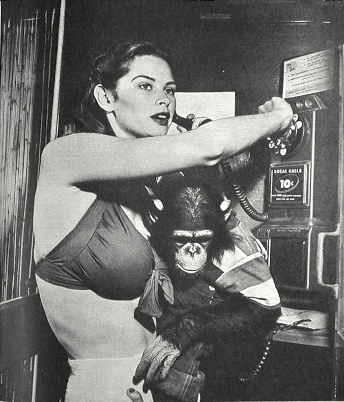 irish mccalla swimsuit chimp pinup