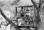 Judy collins Joni mitchell laurel canyon tree house