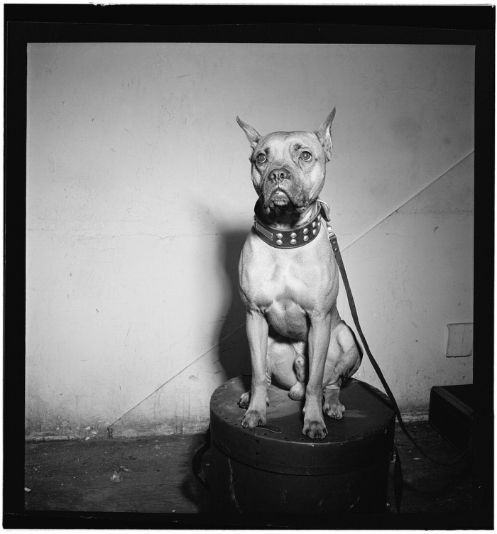 billie holiday boxer mister